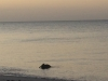46-Pelican, Fishing