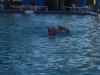 75-Swimming